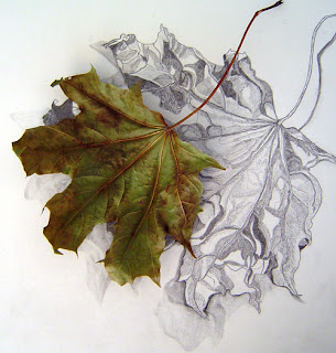 Leaf and drawing - artist unknown
