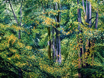 Douglas O Smith: Sweeping Foliage