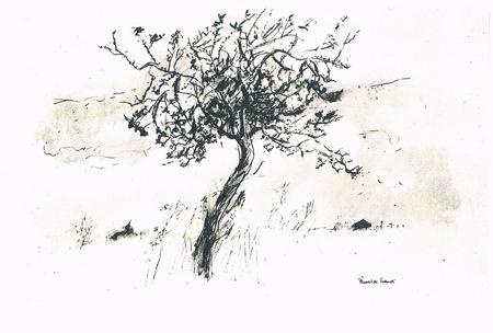 Frederick Franck: Apple Tree