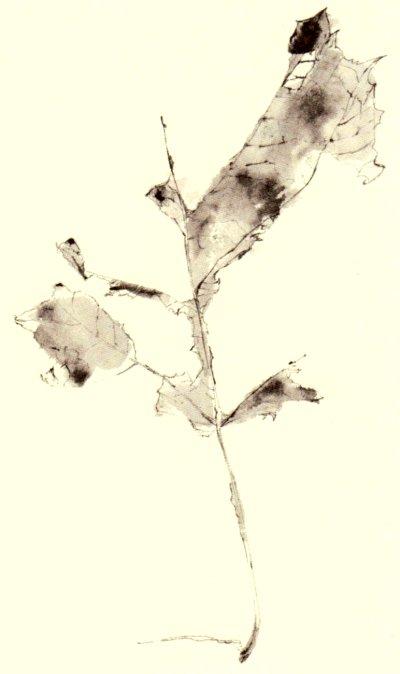 Frederick Franck: Leaf
