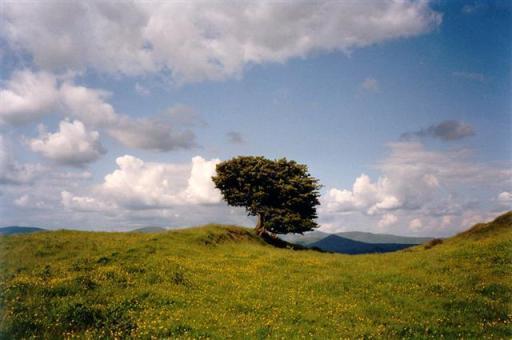 Friedrich Grohe: Single tree in meadow, grey clouds on blue sky