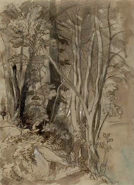 John Ruskin - Rough sketches of tree growth, pen and neutral tint.