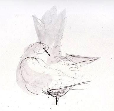 Frederick Franck: Dove