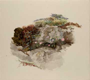 John Ruskin: Watercolor study of foreground material