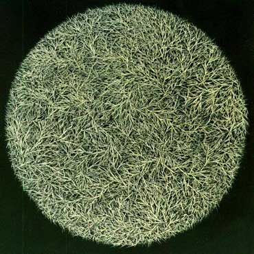 Mosh Kashi: Untitled