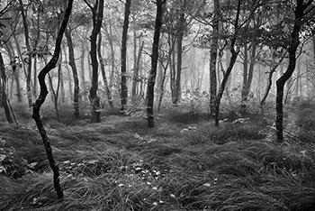 Greybeard Forest - Mitchell Doshin Cantor