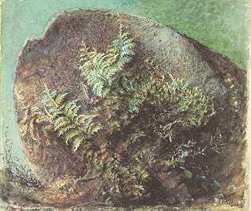 John Ruskin, Ferns on a Rock 1875