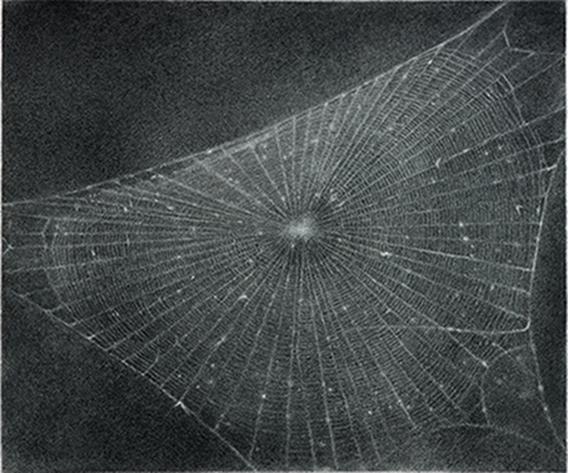 Vija Celmins - Web #1
