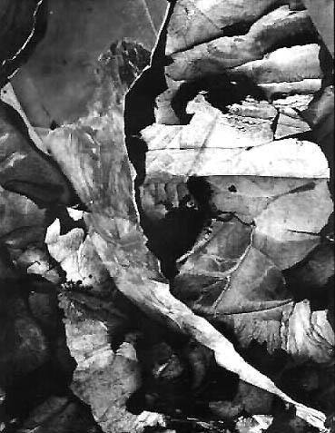 Minor White - Capitol Reef, Utah, 1962