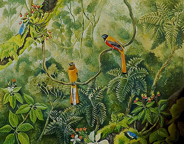 Meena Subramaniam - Trogons and Nuthatches